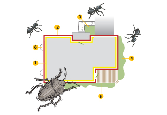Picture of the perimeter pest control program method used by Richter's Beautification.